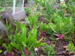 Plant a winter garden. Tips for Year-Round Vegetable Gardens