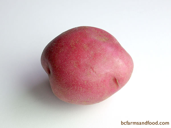 <b>Red Potatoes – Chieftain, Red Pontiac, Red La Soda? -</b>  Red potatoes have smooth reddish skin and white flesh, and are generally round and waxy, with a firm texture. They have less starch than russets or whites. Good in soups, potato salads, boiled, steamed, sauteed, roasted, and scalloped/au gratin.