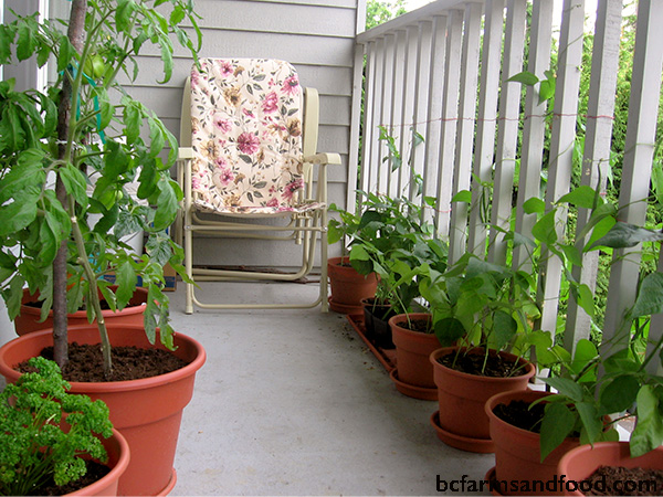 An urban balcony garden. Tips for a sustainable year-round garden.