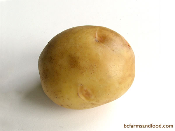 <b>Yellow Potatoes – Yukon Gold, Yellow Finn, German Butterball -</b>  Yellow potatoes have golden flesh and skin, with a buttery flavour. These versatile potatoes are good boiled, mashed, steamed, baked, roasted or French fried. Not as well-suited for shredded dishes, such as gratins.