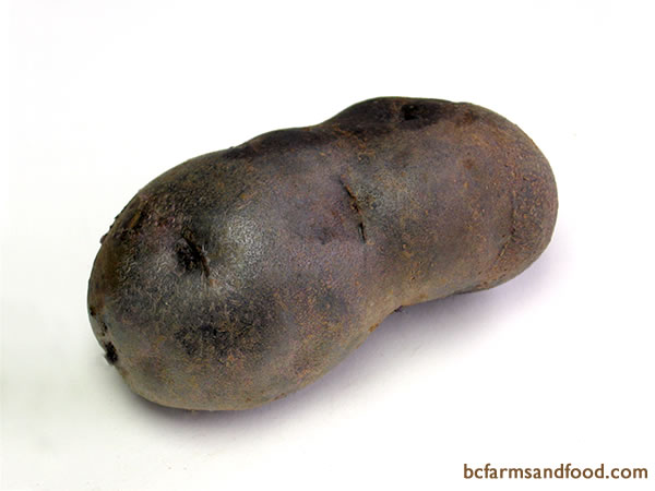 <b>Blue Potatoes – All Blue, Russian Blue - </b>?  Sought after for their unique colour, blue potatoes have a deep purple flesh and skin. With low moisture and high starch (solids) content, blues are often boiled, steamed, baked, mashed or roasted.