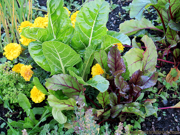 Flowers, beets and chard grow side by side in this diverse cool-weather garden.