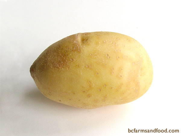 <b>White Potatoes – White Rose, Cascade - </b>?  White potatoes have white flesh and a smooth light skin. Whites have less starch than russets. They are good in soups, boiled, steamed, mashed, roasted, fried, au gratin, scalloped and in potato salads.