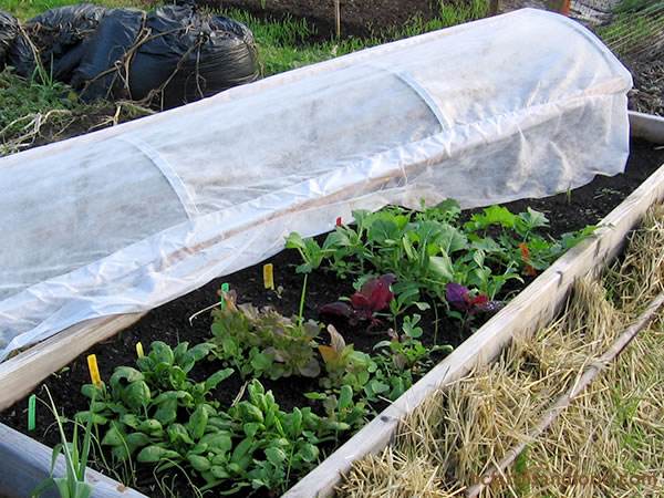 Hoop-style covered supports that span across a garden bed can protect seedlings or established plants. Thick-gauged wire, fiberglass garden rods or bent pvc pipe can form the supports.  Plastic tarps (3 mil or higher), bed sheets, or Reemay (a polyester fabric that allows in light) are common coverings.