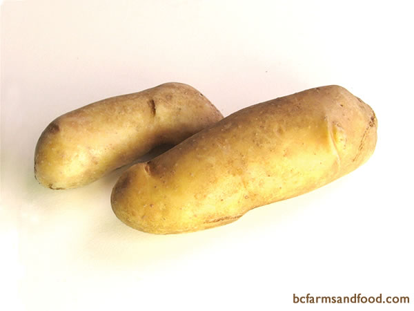 <b>Fingerling Potatoes – Russian Banana, French Fingerlings - </b>  Fingerlings have a distinctive elongated shape with light yellow flesh and smooth skin. Flavourful, waxy and firm textured, these unique potatoes are delicious roasted with herbs. Fingerlings are also good steamed, boiled, baked or in salads.