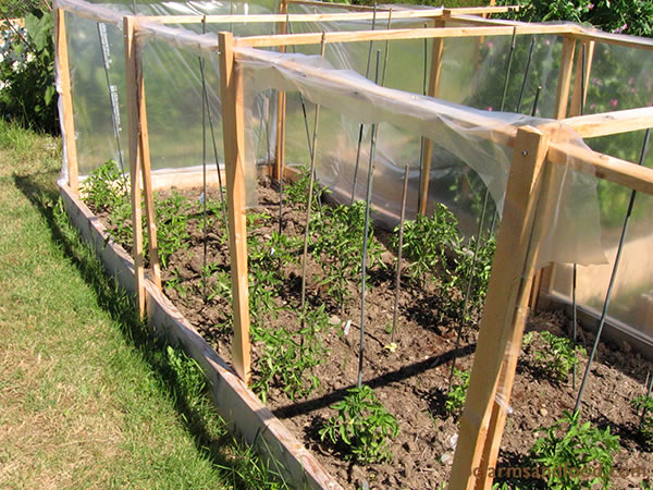 Wind protection can make a huge difference, especially in early spring. Planting near existing walls or fences offers protection against cold wind. You can also build temporary wind breaks with plastic or other materials.