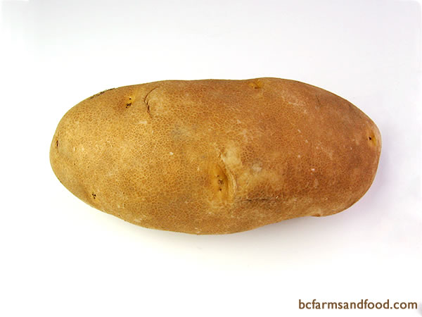 <b>Russet Potatoes – Russet Burbank, Century Russet, Russet Norkotah -</b>  Perhaps the best known of all potatoes, russets are large with brown, netted skin and white flesh. High in starch, russets are the quintessential baking potato. They are also good mashed, roasted or French fried.