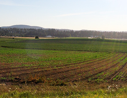 A vista across plowed crop rows on a farm in BC. Why farmland protection is not enough.