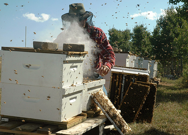 A beekeeper inspects a beehive - Neonicotinoid Pesticides in Honey - A Worldwide Survey