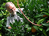 Bob Duncan of Fruit Trees and More