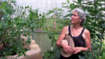 Growing a Sustainable Citrus Garden in Canada. Jane Squier in her citrus greenhouse.