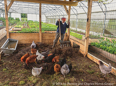 Perrine Herve-Gruyere works in the chicken coop inside the greenhouse at Le Bec Hellouin farm. The farm is an example of profitable and ecological small-scale farming.