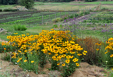 A field of flowers and food plants at Salt Spring Seeds show how a single farm can have wide plant diversity. The Seeds of Sustainability.