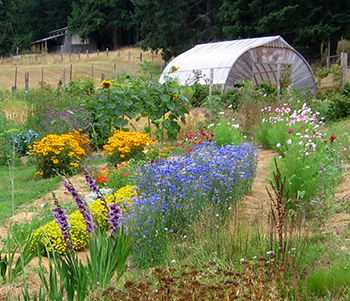 Diverse kinds of flowers grow in the field at Salt Spring Seeds. Plant diversity. The Seeds of Sustainability.