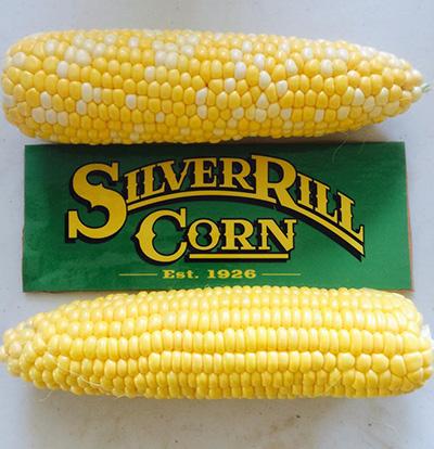 Silver-Rill-Corn