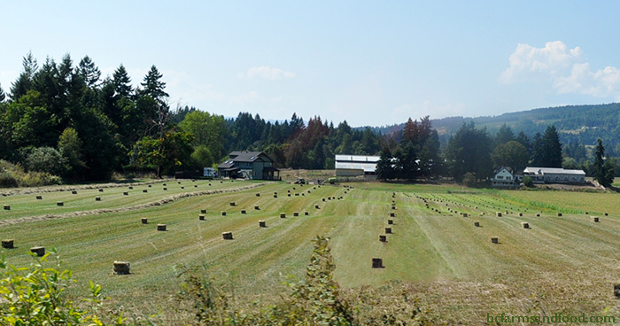 Hay bales dot the landscape on this view of a BC farm. Why Farmland Protection is Not Enough