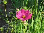 Plants That Attract Beneficial Insects