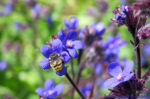 A bumblebee pollinates a flower - Protecting Mother Nature at the Ballot Box