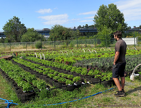 Chris Hildreth looks out over rows of crops in fabric grow bags at Topsoil urban farm in Victoria. A movable urban farm.
