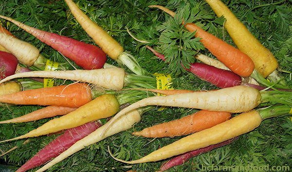 Red, white, yellow and orange carrots. Seasonal vegetables to eat in winter.