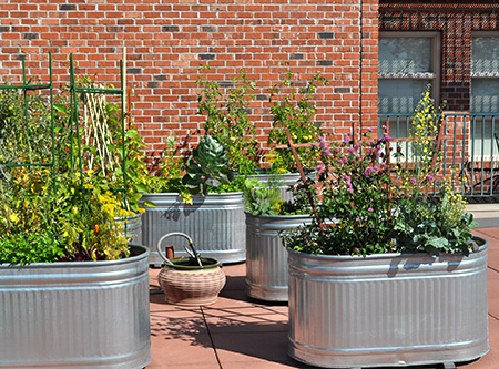 A rooftop vegetable garden in large metal containers.