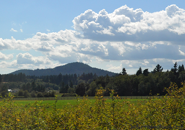 Cowichan Valley & Cobble Hill Farms A-Z Directory. A field in Cowichan Valley