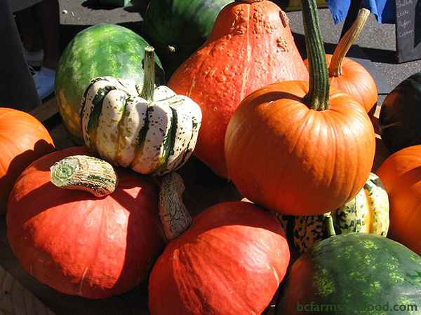 Cowichan Valley & Cobble Hill Farms A-Z Directory. Brightly coloured fall pumpkins