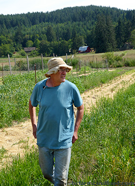 Dan Jason walks along the rows of grain at Salt Spring Seeds. Bringing Back Ancient Grains and Seeds.