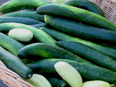 farm cucumbers