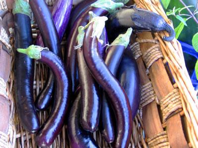farm eggplant