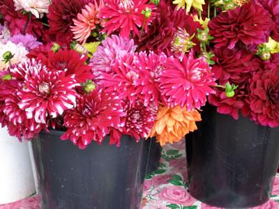 farm flowers1