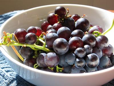 farm grapes2