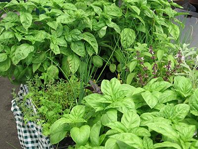 farm-herbs