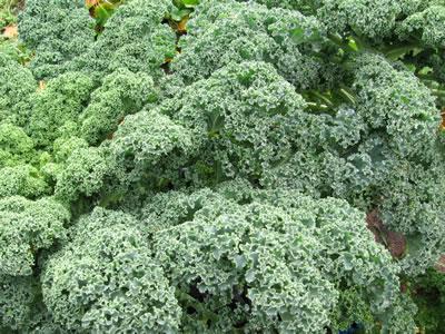 farm kale