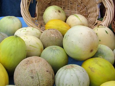 farm melons