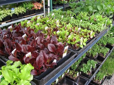 farm plant starts veggies