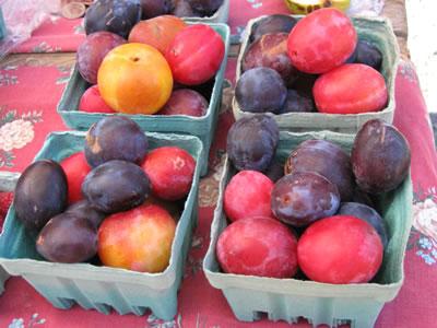 farm plums2