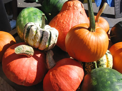 farm pumpkins winter squash