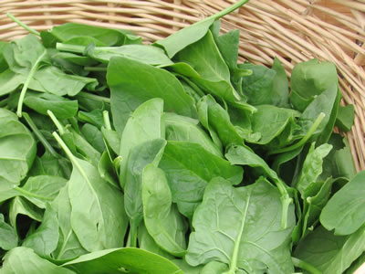 farm spinach