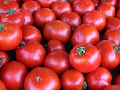 farm tomatoes1