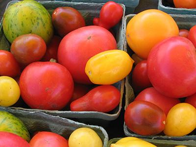 farm-tomatoes2