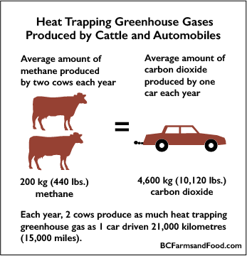 Heat Trapping Greenhouse Gasses Produced by Cattle and Automobiles