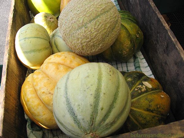 Saanich Peninsula A-Z Directory. Melons