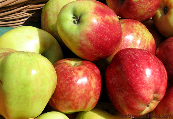 Salt Spring Island Farms A-Z Directory. Apples