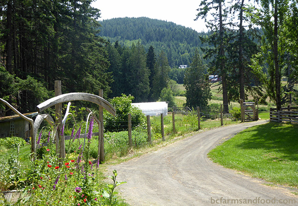 Salt Spring Island Farms A-Z Directory. Farm lane on Salt Spring Island