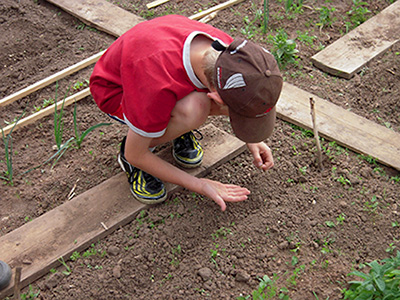 A young boy plants seeds in a school garden. School Gardens: Preparing Kids for Climate Change.
