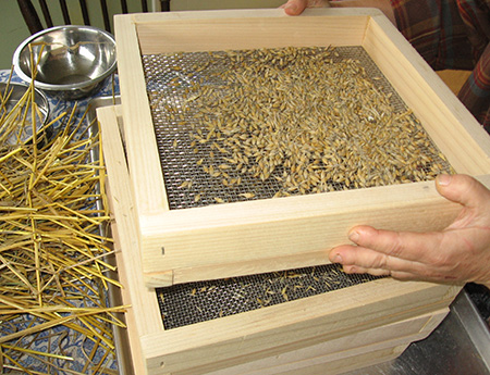 Cleaning and separating barley seed by shaking it through a set of screens.