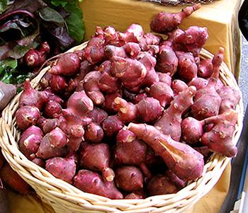 Sunchokes. Seasonal vegetables to eat in winter