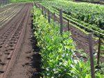 How Underutilized Farmland Can Feed a City
