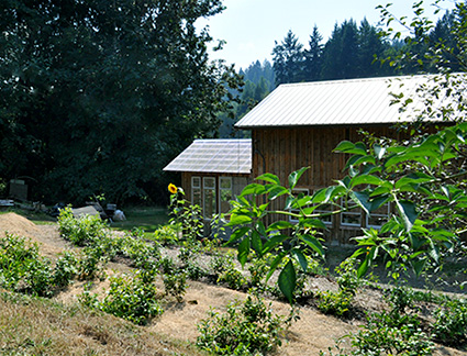 Tea terraces at Teafarm in the Cowichan Valley, BC.